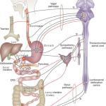 Кои са гастроентерологичните функционални заболявания?